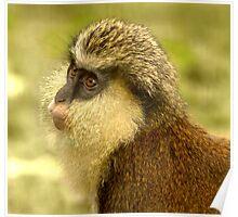 Mona Monkey Poster