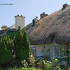 Thatcher at work Adare Co. Limerick Ireland by Paul Playford