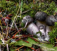 I Hide From You ~ Mushrooms ~ by Charles & Patricia   Harkins ~ Picture Oregon