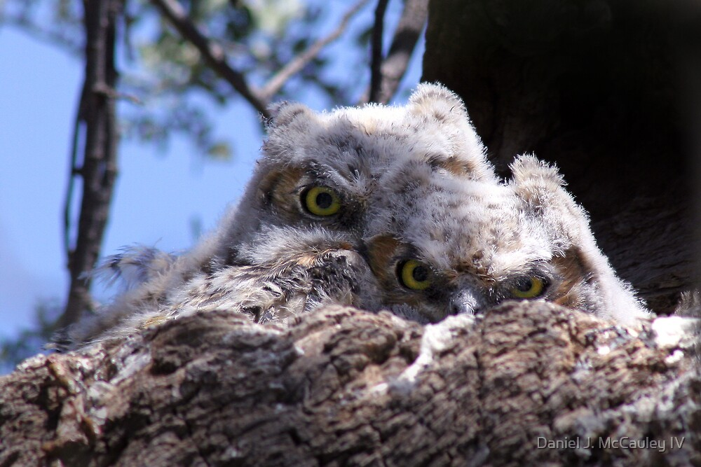 Peek-a-Whooo by Daniel J. McCauley IV