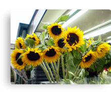 Sunflowers by Jake Canvas Print