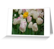 Tulips After a Rain Greeting Card