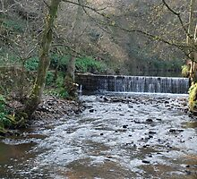 More Farndale 3 by dougie1
