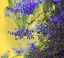Sun setting on wisteria by Holly Martinson