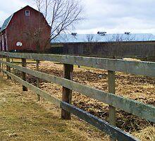 Horse Farm by RLHall