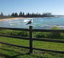 Silver Gull by Wendy Laigne-Stuart