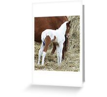 Little Knight Greeting Card