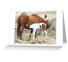 Lunch Time! Greeting Card