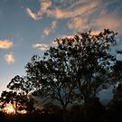 Sunset over Keperra Bushland by MacLeod