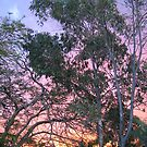 Rainbow Sunset by MacLeod
