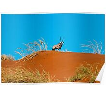 Oryx on an African Hill Poster