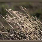 Grass Whispers by ArtFotos