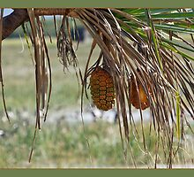 Ripe for Harvest by ArtFotos
