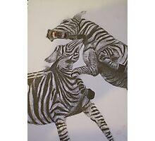 Zebras Fighting Photographic Print
