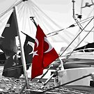 Flag of Turkey - Selective Coloring  by taiche