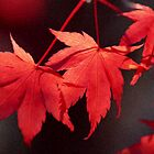 Red Leaves  by Ganz