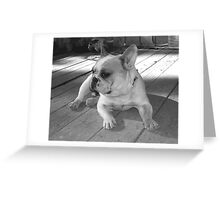 Frenchie on Gaurd Greeting Card