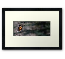 Berry Seeker Framed Print