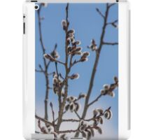 Pussy Willow 1 iPad Case/Skin