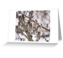 Pussy Willow 2 Greeting Card
