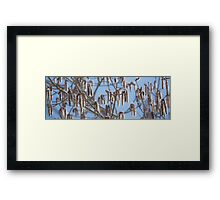 Pussy Willow 3 Framed Print