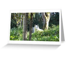 White Wolf at Woodland Park Zoo Greeting Card