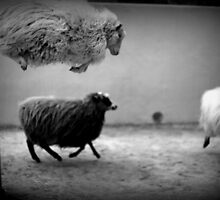 jumping sheep by Marianna Tankelevich
