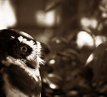 Spectacled Owl by rdshaw