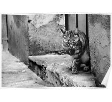 Ravello Cat Poster