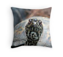 Eastern Box turtle Throw Pillow