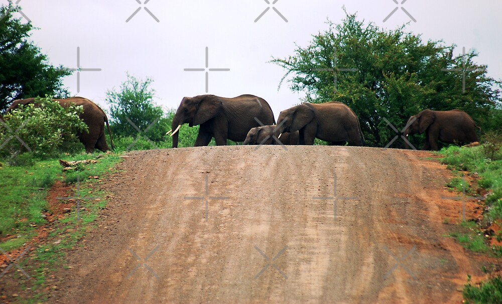 """""""THE ELEPHANT CROSSING"""" by Magriet Meintjes"""