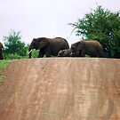 """THE ELEPHANT CROSSING"" by Magaret Meintjes"
