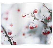 Snowy Berries Poster