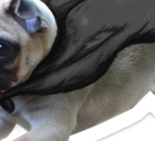 do pugs not drugs Sticker