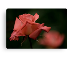 Coral Rose Canvas Print