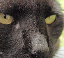 Peretz The Black Cat by Sophie89