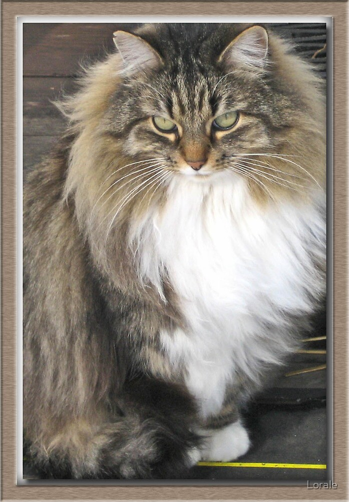 Fluff Kitty in a Pose 1 by Lorale