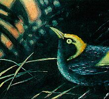 Bowerbird Dawning by EnPassant