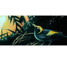 Bowerbird Dawning Photographic Print