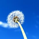Make a wish... by K.D. Hemi