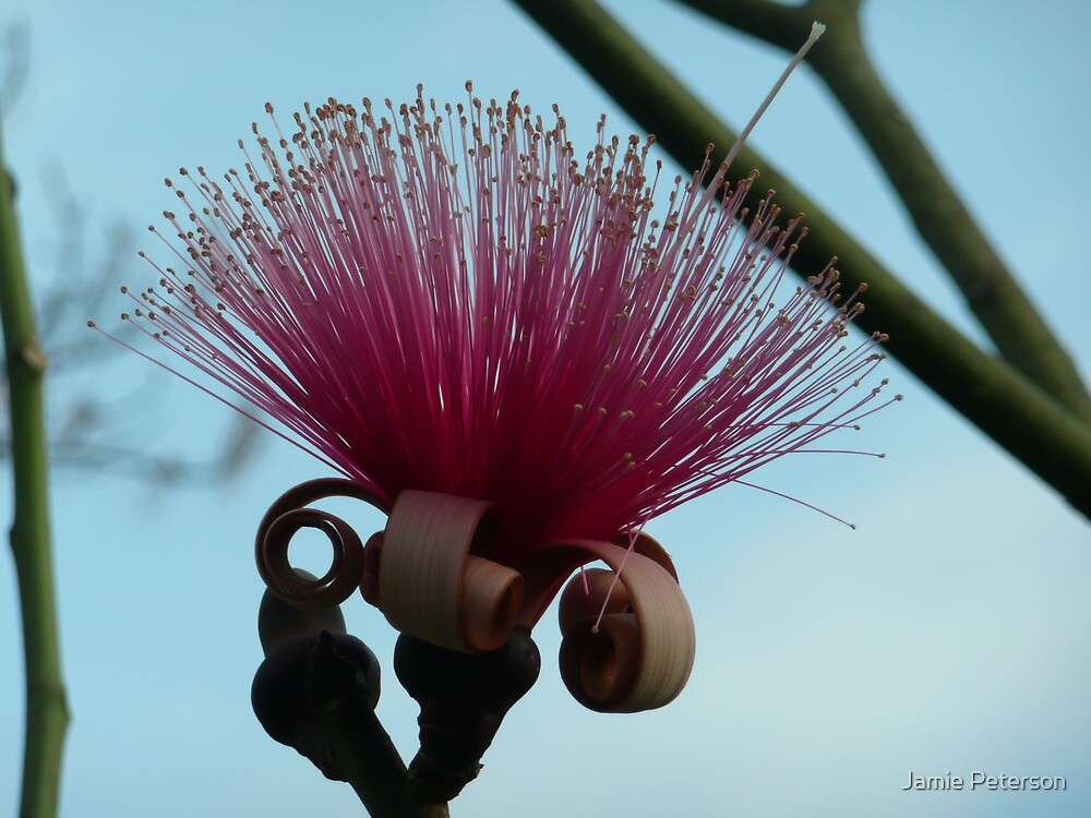 Red Mustache Brush by Jamie Peterson