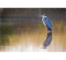 Grey Heron (Colour Pencil Effect) Photographic Print