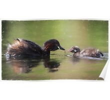 Little Grebe Family (Colour Pencil Effect) Poster