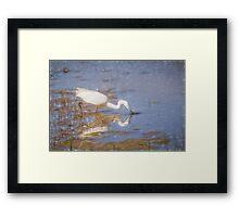 Little Egret (Colour Pencil Effect) Framed Print