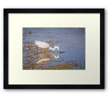 Little Egret (Colour Pencil Effect) Framed Print