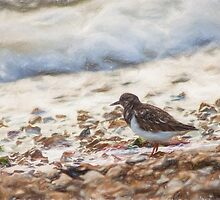 Turnstone (Colour Pencil Effect) by shaftinaction