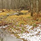 Bear Creek in Winter by lorilee