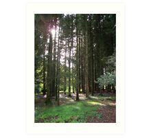 Sunlight Through the Trees at Blarney Castle  Art Print