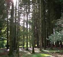 Sunlight Through the Trees at Blarney Castle  by Calysar