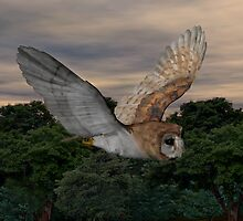 Barn Owl #2 by Walter Colvin